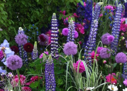 Have you explored our fabulous range of summer flowering plants and flowers?