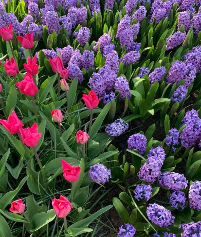 Top 10 for spring flowering