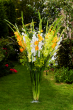Gladioli Sundae Collection