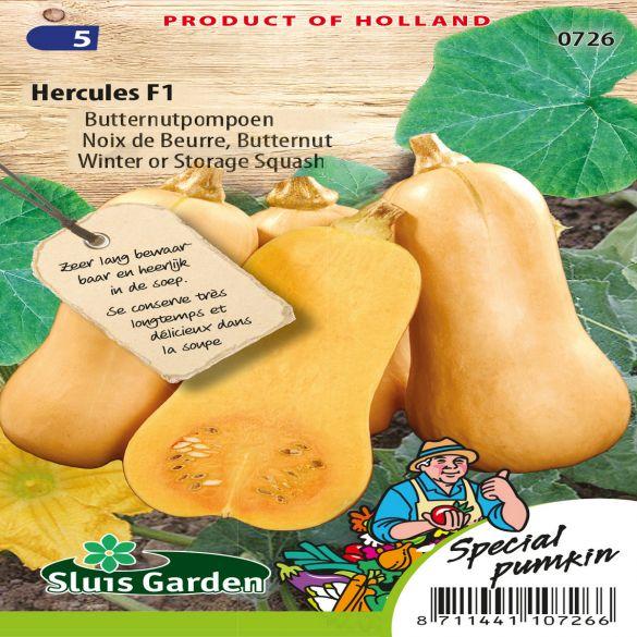 Pumpkin Butternut Hercules F1