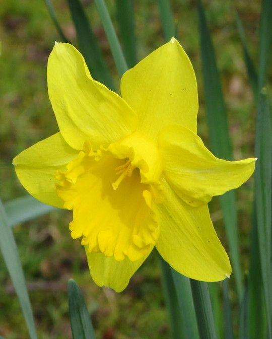 Narcissus Adventure