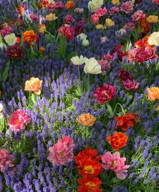 Browse de spannende nieuwe toevoegingen aan ons bloembollen en planten assortiment