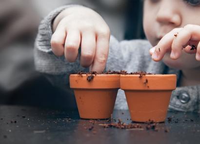 Parcourez nos nouveaux bulbes à fleurs et plantes