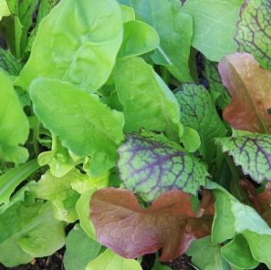 Grow your own vegetables and flowers
