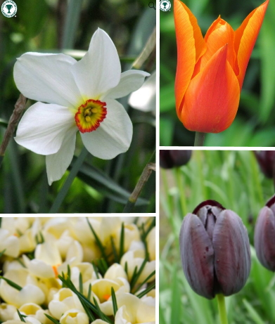 Top Picks Spring