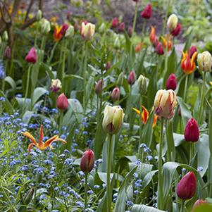 Votre jardin mois par mois