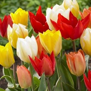 Choosing bulbs by colour