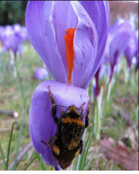 Vlinders en Bijen Collectie