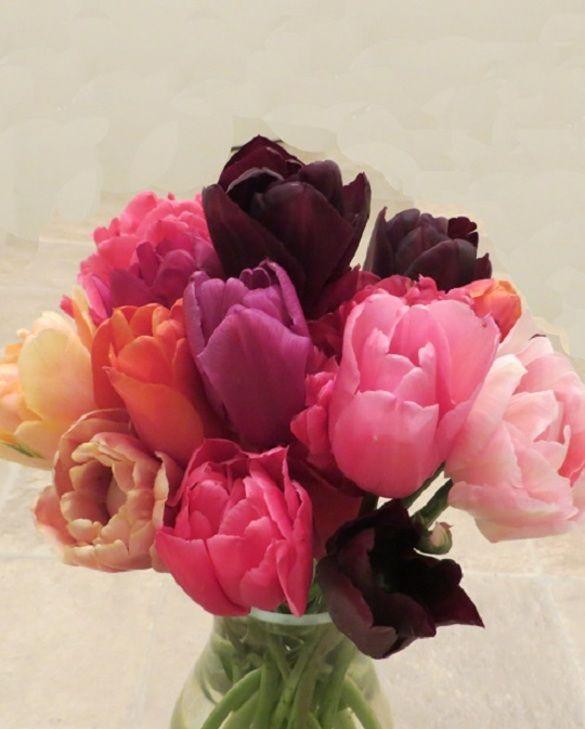 Salsa Dance Tulip Collection