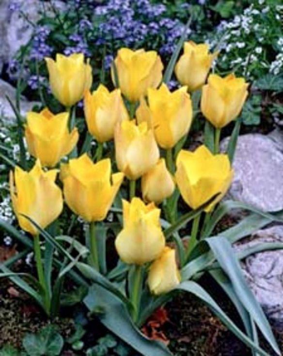Tulip Batalini Bronze Charm
